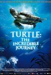 Turtle (2011)